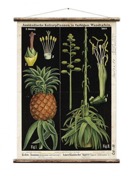 Wall Hanging by Erstwhile | Botanicals | Pineapple & Agave